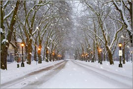 Jamie & Judy Wild - Snow covered avenue