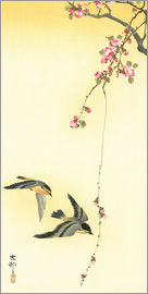 Ohara Koson - Starlings and Cherry Tree
