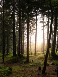 Philipp Dase - Forest in the evening light