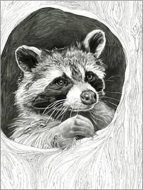 Ashley Verkamp - Raccoon In A Hollow Tree Sketch