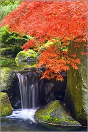 Don Paulson - Waterfall and Japanese Maple at Portland Japanese Garden