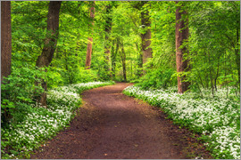 Andreas Wonisch - Path through Forest full of Wild Garlic during Spring