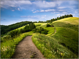 Andreas Wonisch - Path over Rolling Hills in Summer