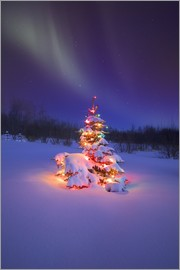 Carson Ganci - Christmas tree and Northern Lights
