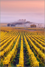 Matteo Colombo - Vineyards in autumn, Champagne, France