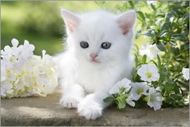Greg Cuddiford - White cat in flowers