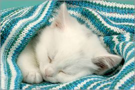 Greg Cuddiford - White kitten sleeping under stripy blanket