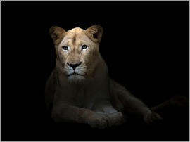 White Lioness in the dark night