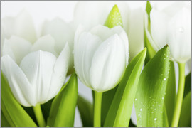 Nailia Schwarz - White Tulips 04