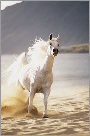 Vince Cavataio - White horse in the morning light