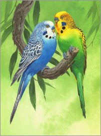 John Francis - 25917 Budgies on Green Background