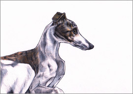 Jim Griffiths - Whippet illustration, colour pencil drawing