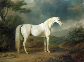 Sawrey Gilpin - White horse in a wooded landscape, 1791