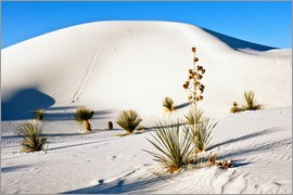 Bernard Friel - White Sands National Monument - Transverse Dunes and Soaptree Yucca