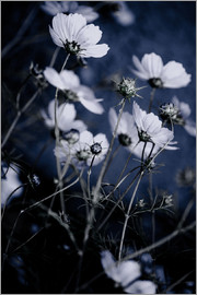 Mareike Böhmer Photography - Wild Flowers 10