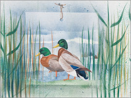 Franz Heigl - Pair of wild ducks