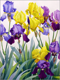 Christopher Ryland - Yellow and Purple Irises