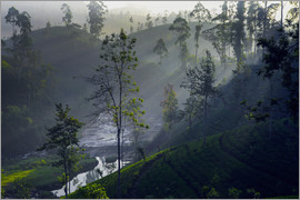 Paul Kennedy - Enchanting tea plantation forest, Sri Lanka