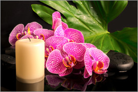 Zen still life with orchids