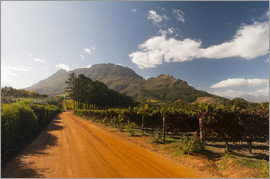 Sergio Pitamitz - Zorgvliet Wine Estate, Stellenbosch, Cape Province, South Africa, Africa