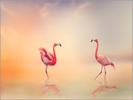 Two Flamingoes in The Lake at Sunset