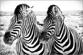 Jan Schuler - Two Zebras