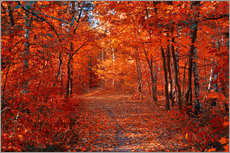 Gallery print  Colorful autumn - Steffen Gierok