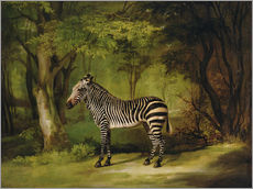 Wall Stickers  A Zebra - George Stubbs