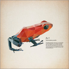 Gallery print  fig5 polygon frog square - Labelizer