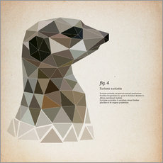Wall sticker fig4 Polygon meerkat  square