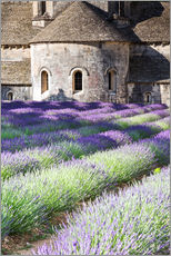 Wall sticker  Senanque abbey and lavender, Provence - Matteo Colombo