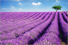 Wall Stickers  Lavender field and tree - Matteo Colombo