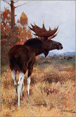 Wall sticker  Elk or Moose - Wilhelm Kuhnert