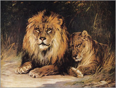 Gallery print  Lions
