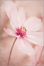Wall Stickers  Romantic Cosmea - INA FineArt