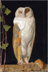 Gallery print  The White Owl - William James Webbe
