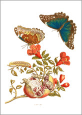 Wood print  Pomegranate and blue morpho - Maria Sibylla Merian