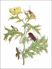 Wall sticker  Mexican Prickly Poppy and longhorn beetles - Maria Sibylla Merian
