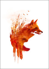 Gallery print  Fox from Lake Balaton - Robert Farkas