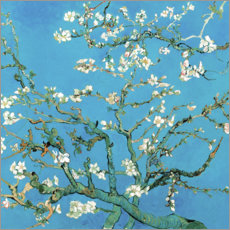 Premium poster  Almond tree in bloom - Vincent van Gogh