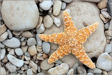 Gallery print  Starfish on a beach - Tony Craddock