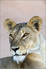 Wall Sticker  Lioness - Tony Camacho