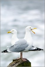 Wall sticker  Two Herring Gulls - Duncan Shaw