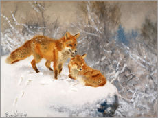 Wall Sticker  Two foxes in a winter landscape - Bruno Andreas Liljefors