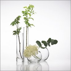 Wall sticker Plants in glass vases