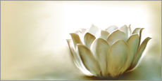 Wall sticker White lotus