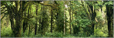 Wall sticker  Temperate rainforest - Peter Scoones