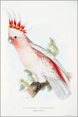 Wall sticker  Leadbetter's Cockatoo - Edward Lear