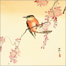 Wall sticker  Red bird and cherry blossom - Ohara Koson