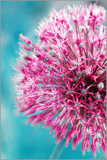 Wall sticker  Allium in Pink - INA FineArt